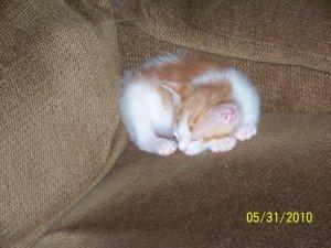 Baby Cheerio.