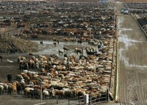 Conventional Beef Industry