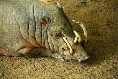 Ugly Endangered Animals | Ugly Endangered Species Serendipitousscavenger